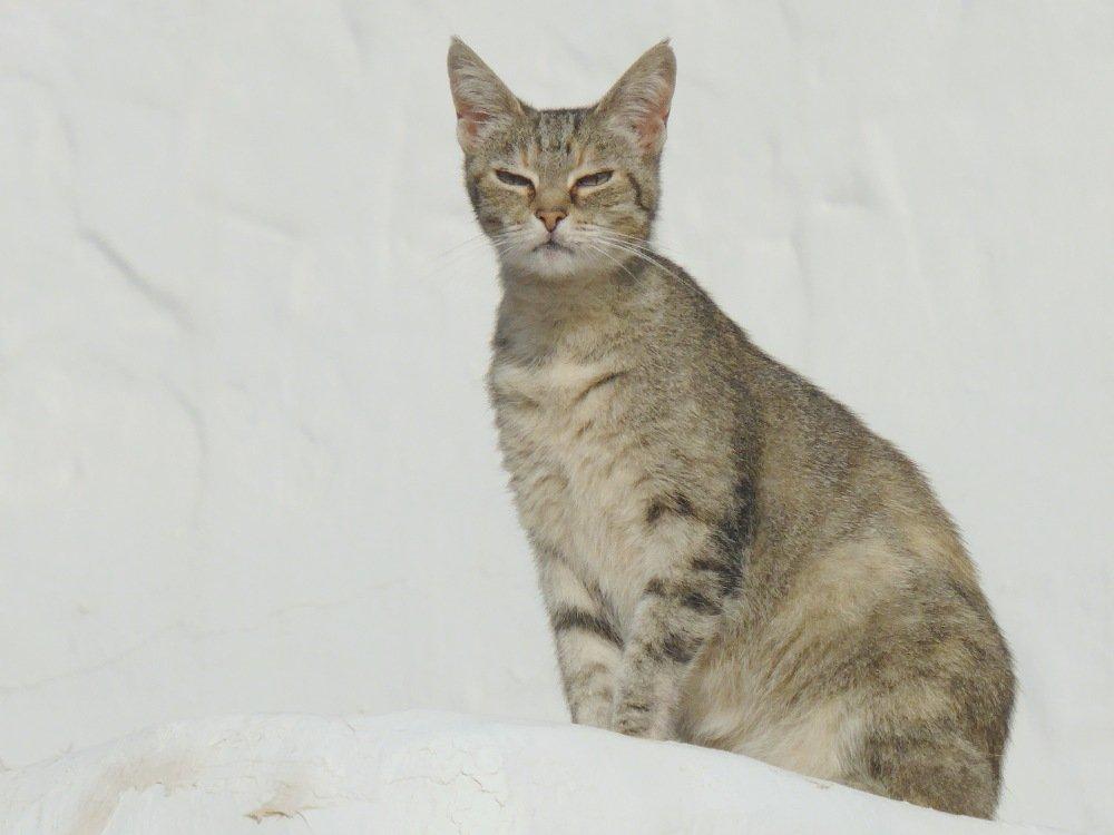 Finca Luciana - Katze